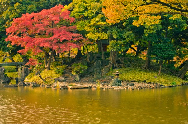 кохии осенью фото